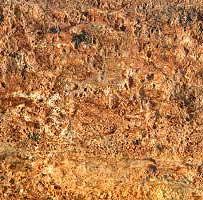 petrified-wood-texture.jpg